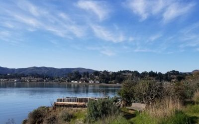 Richardson Bay Audubon Center and Sanctuary 2019